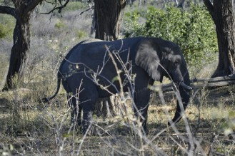 Elefante en Buffalo Core Area