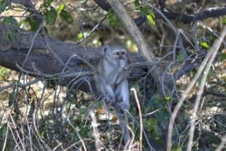Mono en Buffalo Core Area