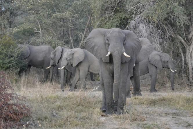 2017-06-namibia-caprivi-muvunje-carretera-elefantes-1