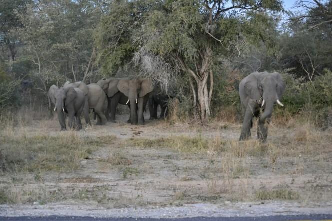 2017-06-namibia-caprivi-muvunje-carretera-elefantes-2.jpeg