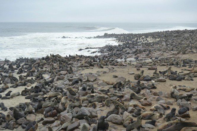 2017-06-namibia-costa-de-los-esqueletos-cape-cross-28