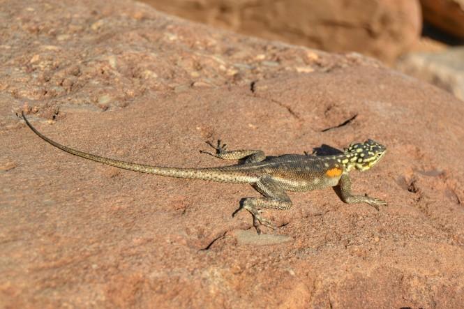 2017-06-namibia-damaraland-twyfelfontein-05.jpeg