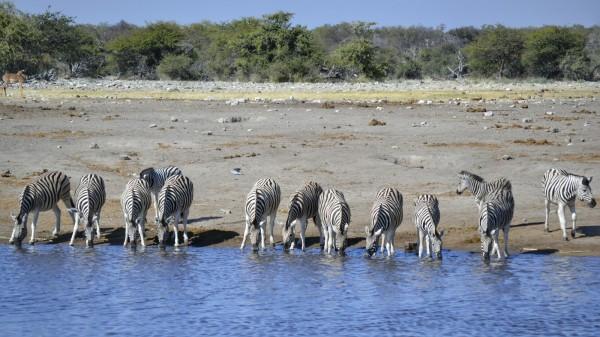 2017-06-namibia-etosha-dia-1-chudop-13-cebra