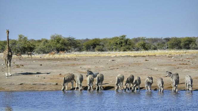 2017-06-namibia-etosha-dia-1-chudop-14-jirafa-cebra.jpeg