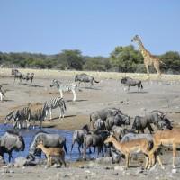 Namibia 2017 – Etapa 4 – Etosha (Día 1): Namutoni-Halali