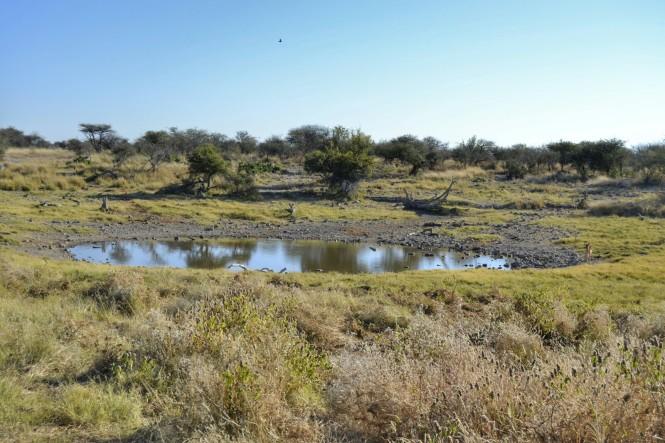 2017-06-namibia-etosha-dia-1-groot-okevi