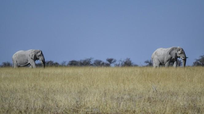 2017-06-namibia-etosha-dia-1-springbokfontein-1-elefantes.jpeg