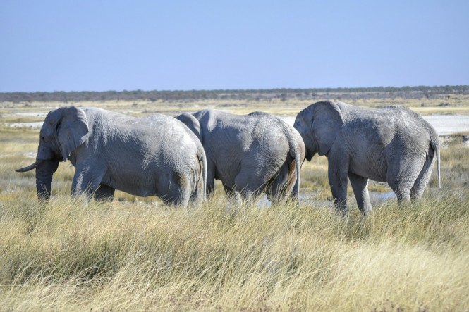 2017-06-namibia-etosha-dia-1-springbokfontein-2-elefantes