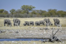 Elefantes y Cebras en Etosha