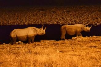 Rinocerontes en Etosha
