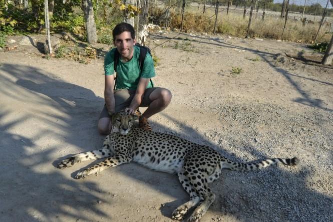 2017-06-namibia-otjitotongwe-cheetah-guest-farm-02-guepardos