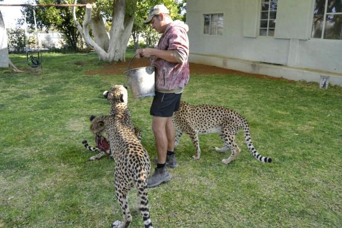 2017-06-namibia-otjitotongwe-cheetah-guest-farm-04-guepardos
