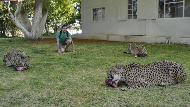 2017-06-namibia-otjitotongwe-cheetah-guest-farm-05-guepardos.jpeg