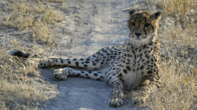 2017-06-namibia-otjitotongwe-cheetah-guest-farm-10-guepardos.jpeg
