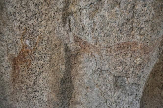 2017-06-namibia-spitzkoppe-golden-snake-05-golden-snake