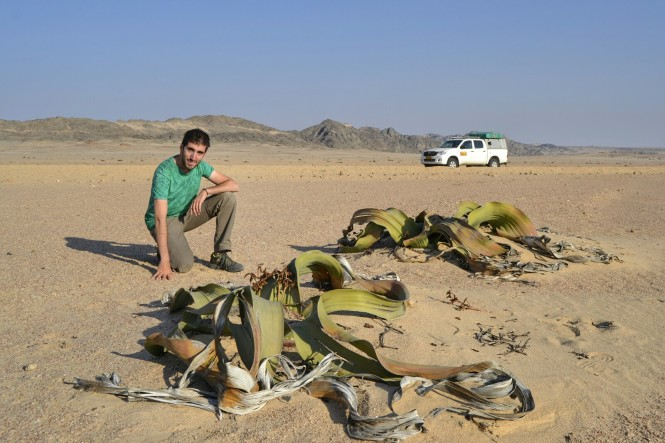 2017-06-namibia-swakopmund-welwitschia-plains-beacon-11-welwitschia-mirabilis-4.jpeg