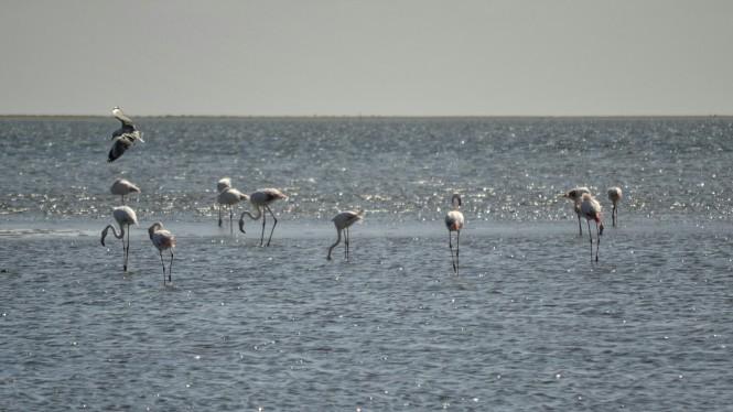 2017-06-namibia-walvis-bay-laguna-flamencos-2
