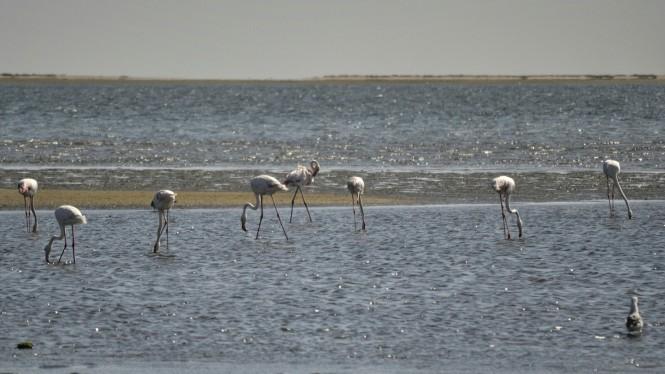 2017-06-namibia-walvis-bay-laguna-flamencos-3