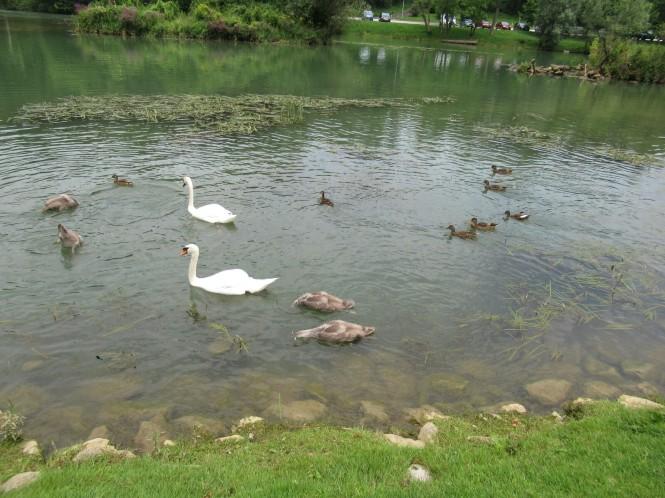 2018-07-eslovenia-dolenjska-grad-otocec-2