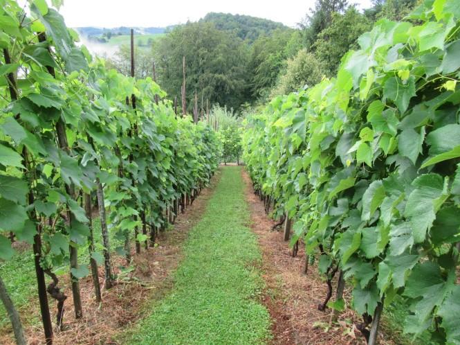 2018-07-eslovenia-dolenjska-trnic-marco-wine-1