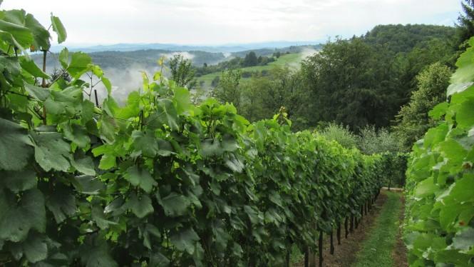2018-07-eslovenia-dolenjska-trnic-marco-wine-2