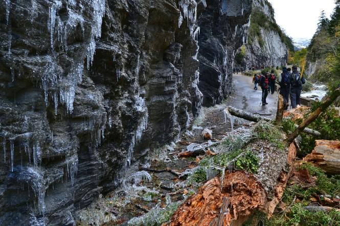 2012-10-pirineos-castillo-dacher-02-Arbol-congelado