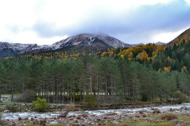 2012-10-pirineos-castillo-dacher-03-Arbol-congelado