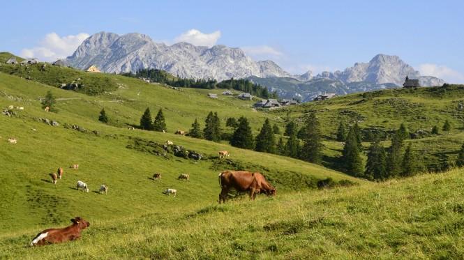 2018-07-eslovenia-velika-planina-12-velika-y-mala-planina