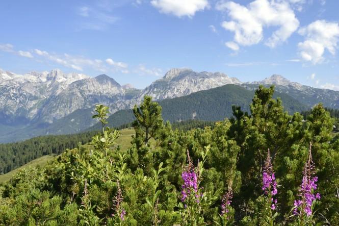 2018-07-eslovenia-velika-planina-23-velika-y-mala-planina