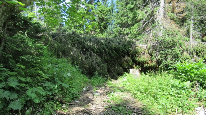 2018-07-eslovenia-alpes-julianos-triglav-etapa-1-06-bosque