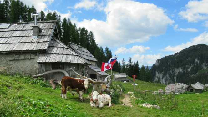 2018-07-eslovenia-alpes-julianos-triglav-etapa-1-08-Bajada-Planina-Pri-Jezeru.jpeg