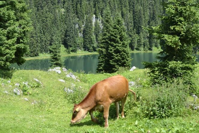 2018-07-eslovenia-alpes-julianos-triglav-etapa-1-10-Planina-Pri-Jezeru