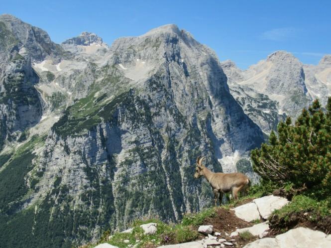 2018-07-eslovenia-alpes-julianos-triglav-etapa-3-28-hacial-el-prag-cabra.jpeg