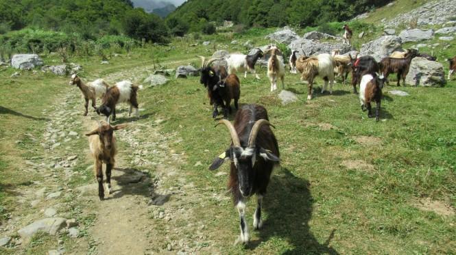 2018-08-golondrinas-dia-2-40-hacia-pont-lamary-cabras.jpeg