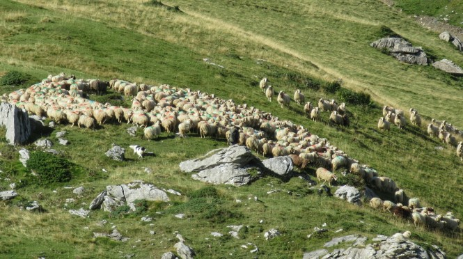2018-09-golondrinas-dia-3-06-hacia-cabane-du-cap-de-la-baitch-ovejas