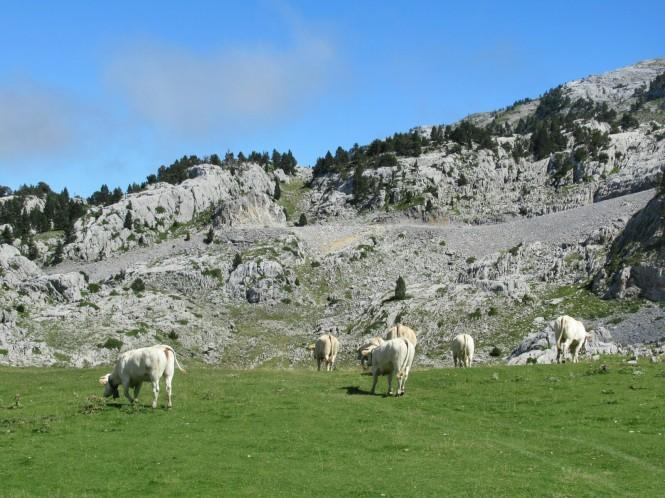 2018-09-golondrinas-dia-3-43-hacia-la-pierre-vacas