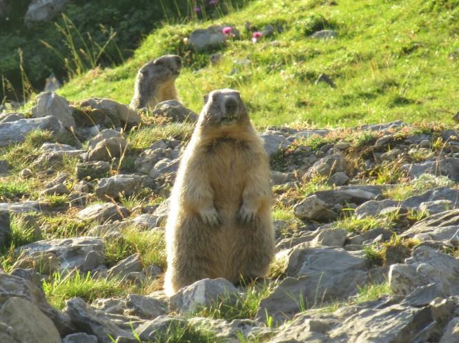2018-09-golondrinas-dia-4-04-la-pierre-st-martin-hacia-el-arlas-marmotas