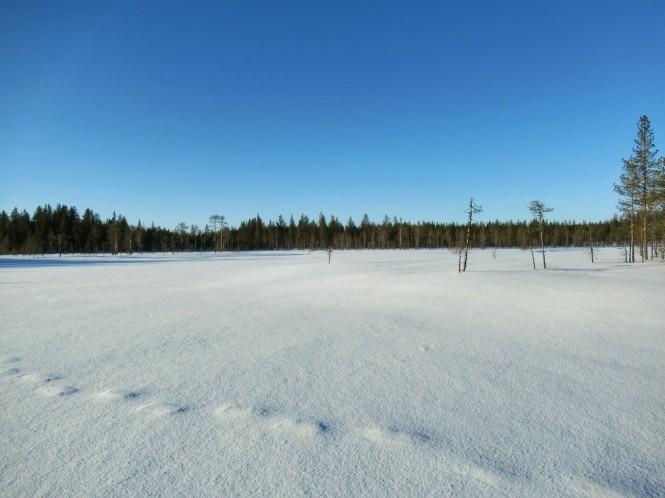 2019-03-finlandia-dia-1-29-kukkarolampi.jpeg