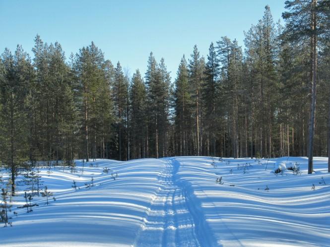2019-03-finlandia-dia-2-11-hacia-vieremanjarvi.jpeg