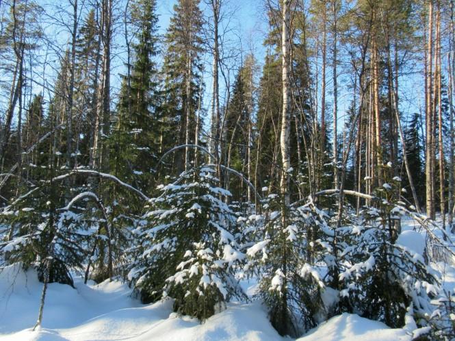 2019-03-finlandia-dia-2-25-hacia-kovavaara