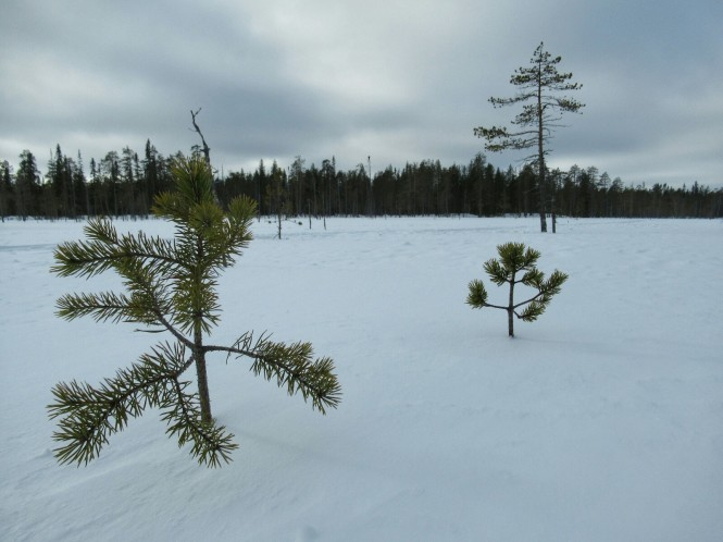 2019-03-finlandia-dia-4-07-hacia-teerilampi.jpeg