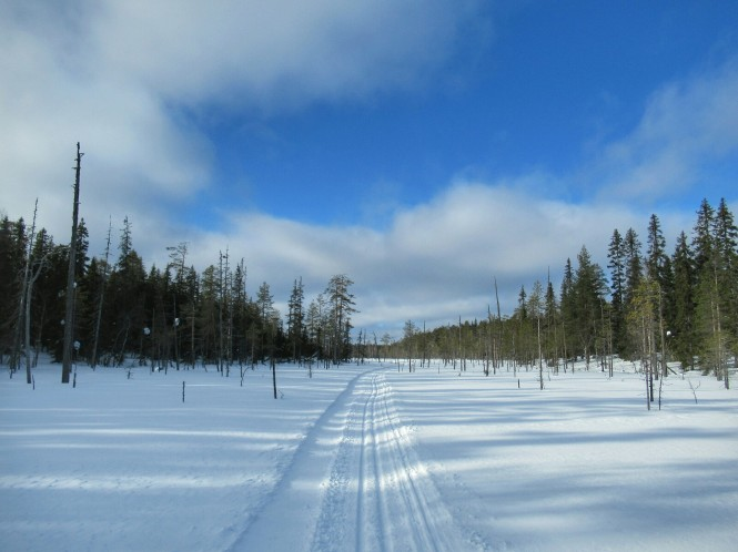 2019-03-finlandia-dia-4-12-hacia-teerilampi.jpeg