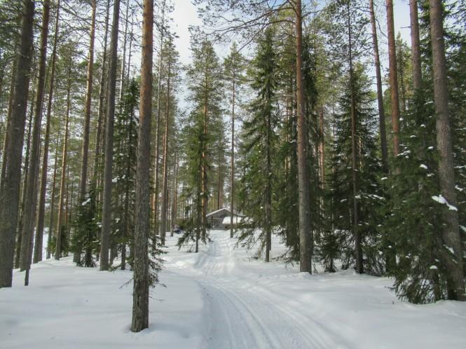 2019-03-finlandia-dia-4-13-hacia-teerilampi.jpeg