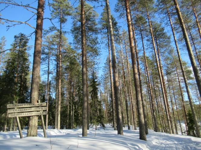 2019-03-finlandia-dia-4-20-hacia-martinselkonen.jpeg