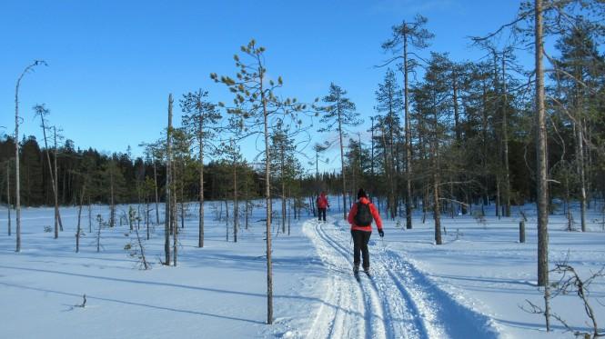 2019-03-finlandia-dia-4-21-hacia-martinselkonen.jpeg