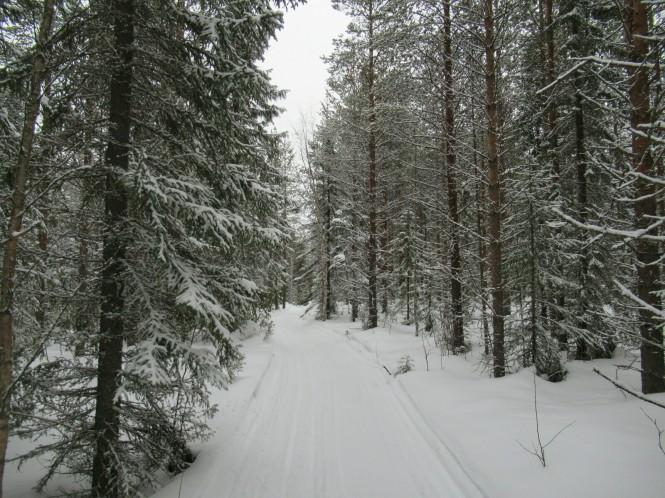 2019-03-finlandia-dia-5-02-hacia-teerilampi.jpeg