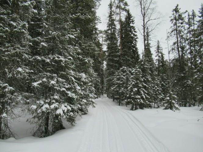 2019-03-finlandia-dia-5-03-hacia-teerilampi.jpeg
