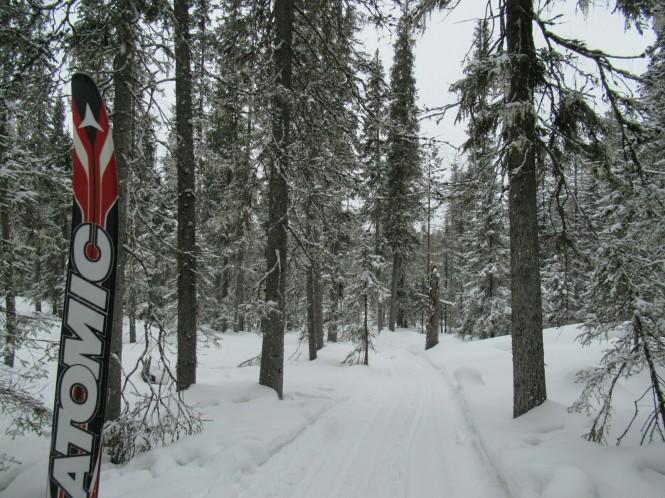 2019-03-finlandia-dia-5-10-hacia-lintulampi-autiotupa