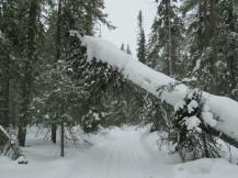 Esquí en Martinselkonen - Día 5