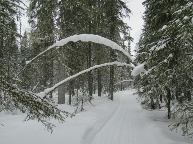 2019-03-finlandia-dia-5-15-hacia-lintulampi-autiotupa.jpeg